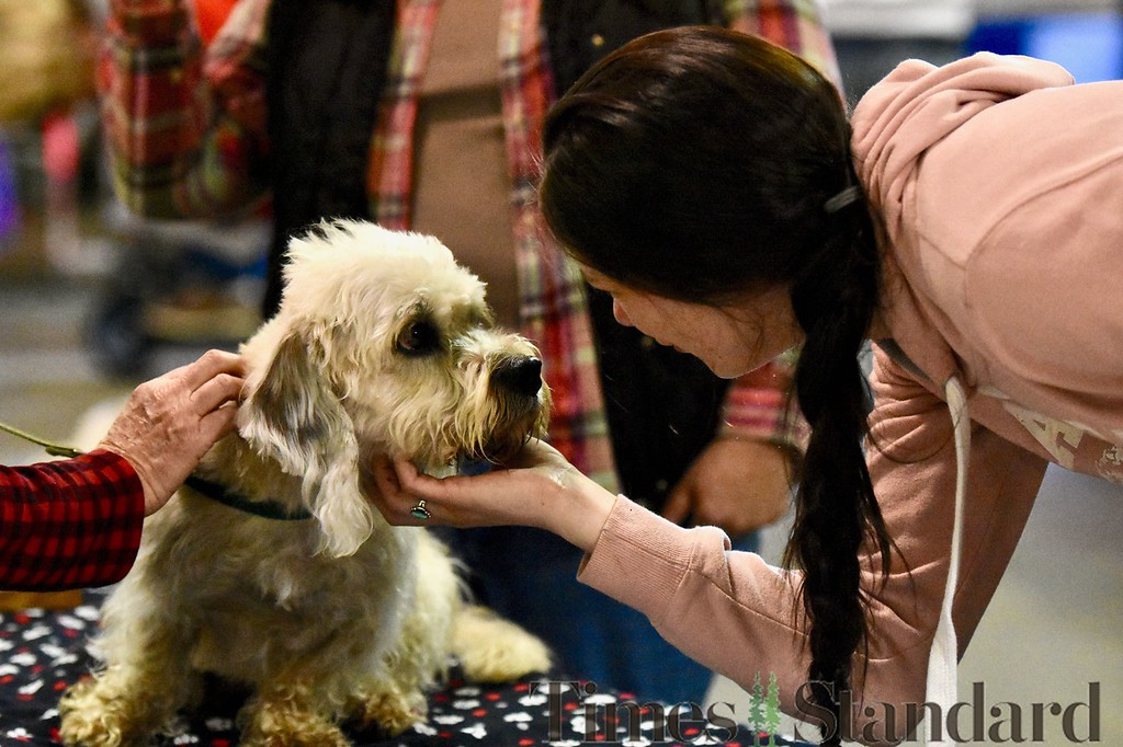 . Brittany Anderson pets Stanley, 4, a Dandie Dinmont Terrier owned by Lorene Luster. José Quezada�For the Times-Standard