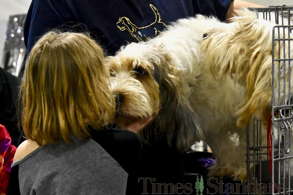 . A youngster is kissed by Dunie, a Grand Basset Griffon Vendeen. José Quezada�For the Times-Standard
