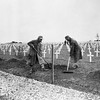 """One year after the D-Day landings in Normandy, German prisoners landscape the first U.S. cemetery at Saint-Laurent-sur-Mer, France, near """"Omaha"""" Beach, May 28, 1945. (AP Photo/Peter J. Carroll)"""