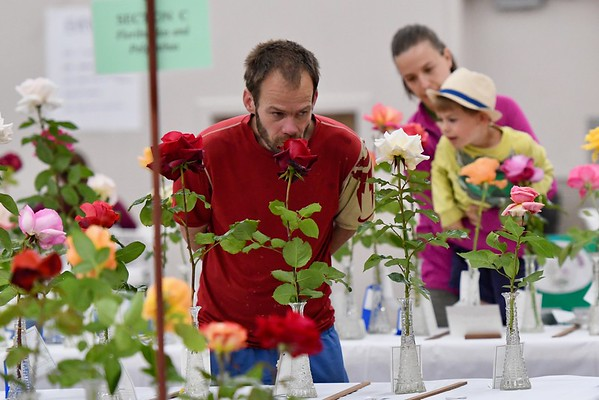 PHOTOS: Annual Rose Show—Humboldt Rose Society