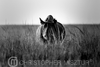 Rhino portrait in black and white