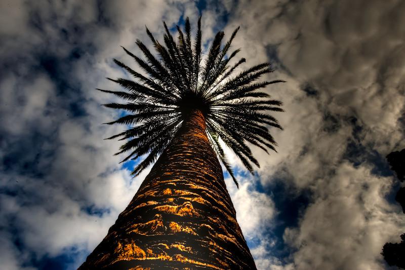 Las Palmas, Gran Canaria, Palm tree and sky.