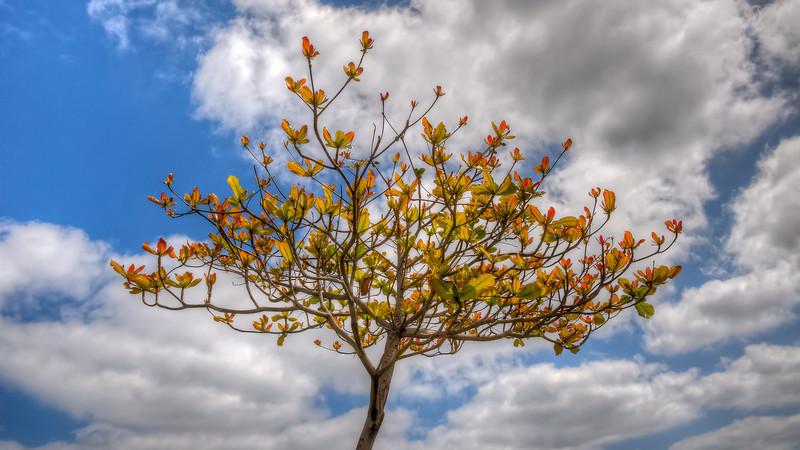 Las Palmas, Gran Canaria, trees and Canary sky.