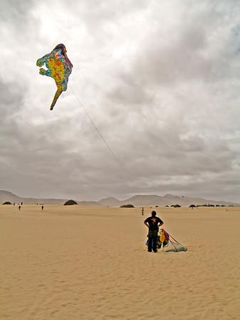 Fuerteventura, Corraljeo, dragons in the Dunas de Corralejo.