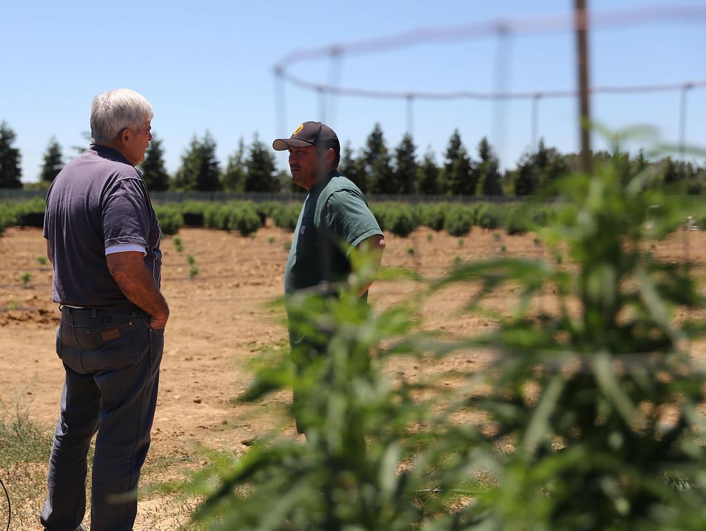 . SARAH DOWLING - DAILY DEMOCRAT Woodland City Councilman Skip Davies, left, chats with West Sacramento Management Group President Cipriano Sulamo at a Yolo County marijuana grow.