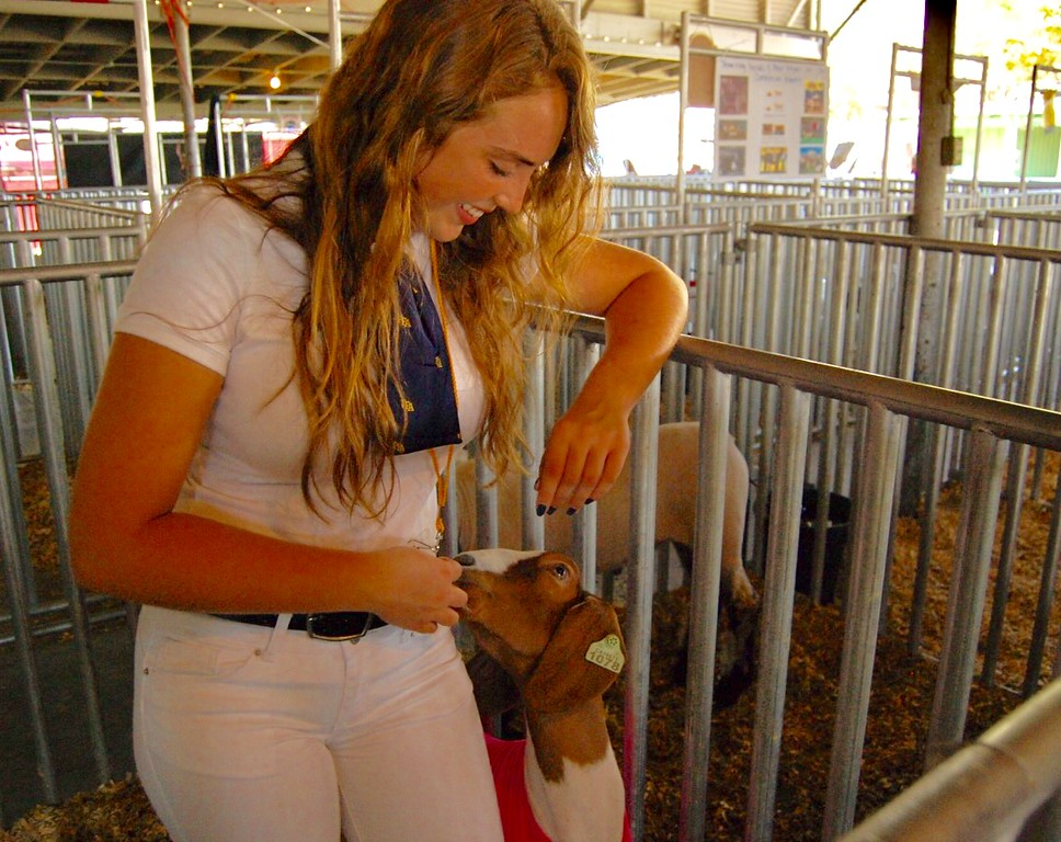 . JENICE TUPOLO - DAILY DEMOCRAT FFA members gear up for the annual animal auction at the Yolo County Fair.