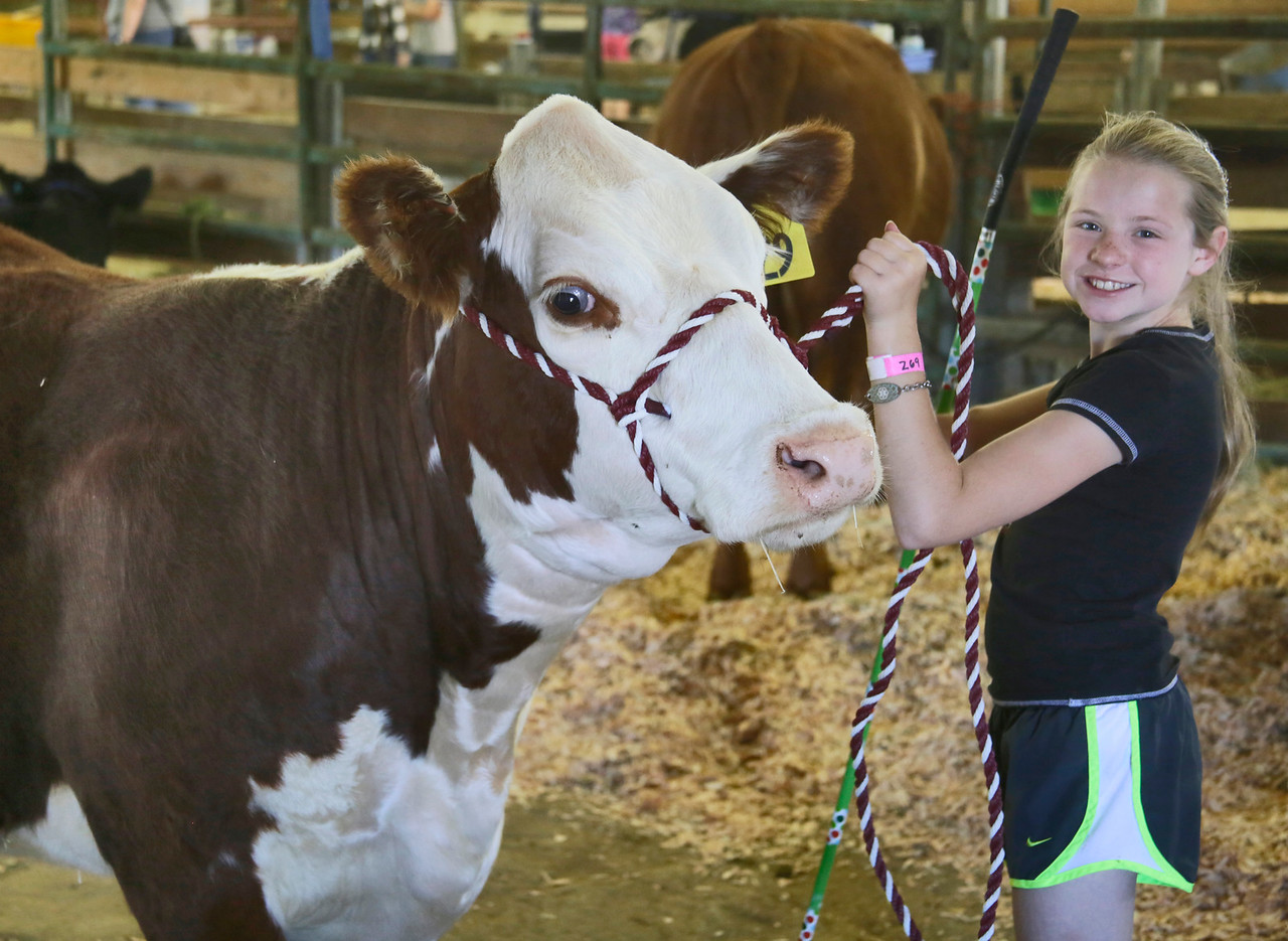 Shaun Walker — The Times-Standard  Jocie Hague, 11, of McKinleyville stands in the livestock barn with her heifer Sierra at the Best of Humboldt Fair at Redwood Acres on Thursday. The fair runs through Sunday at 5 p.m., with the carnival otherwise open 12 p.m. to midnight, exhibit buildings 11 a.m. to 8 p.m., and several shows taking place each afternoon and early evening. For more information, go to redwoodacres.com.