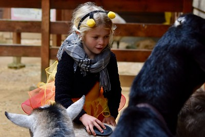 Jade Blodgett, 5, smiles as she gently brushes a goat at the animal petting section at Sequoia Park Zoo. José Quezada—For Times-Standard
