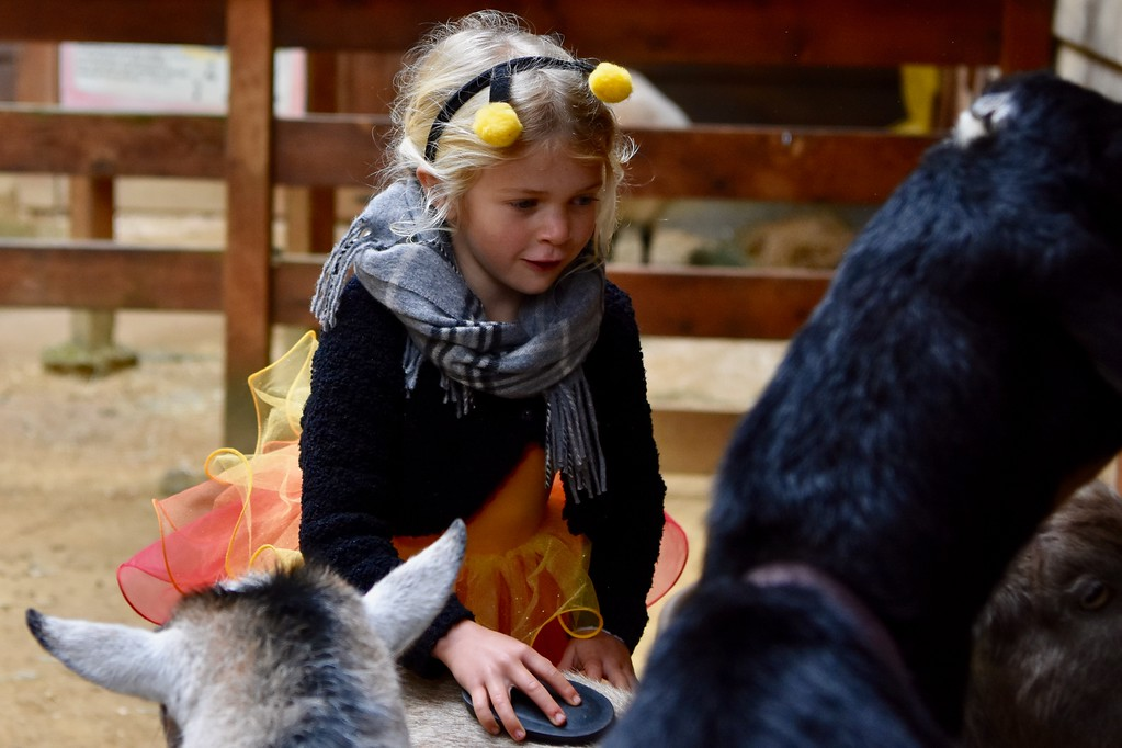 . Jade Blodgett, 5, smiles as she gently brushes a goat at the animal petting section at Sequoia Park Zoo. José Quezada�For Times-Standard