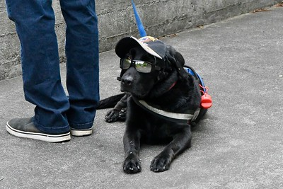 Barney, a black lab retriever, had to watch the proceedings from outside Redwood Bowl. José Quezada—For Times-Standard