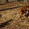 Doug, Ruby (three), petey (puppy)01
