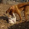 Petey (puppy), Doug (pup)02