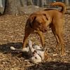 Petey (puppy), Doug (pup)03