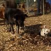Petey (puppy), Finley, Doug01