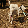 Petey (puppy), Bobbie Joe01