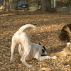 Brandy (pup girl), Simon (puppy)02