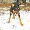 Bella (new rescue)_02