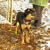 Bella (new rescue)_05