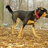 Bella (new rescue)_04