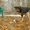 Bella (new rescue)_03