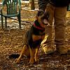 Bella (new rescue)_01