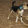 Buddy (puppy), Maddie_05