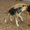 Buddy (puppy), Brandy (puppy)_03