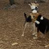 Buddy (puppy), Maddie_04
