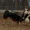 Buddy (puppy), Maddie, Misha_01
