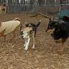 Buddy (puppy), Kadie (new, 11mo.), Misha