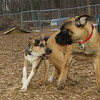Buddy (puppy), Brandy (puppy)_02