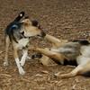 Buddy (puppy), Maddie_06