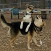 Buddy (puppy), Maddie_03
