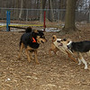 Buddy (puppy), Maddie, Misha_02