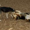 Buddy (puppy), Maddie_08