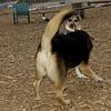 Buddy (puppy), Maddie_02