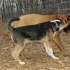 Buddy (puppy), Brandy (puppy)_04