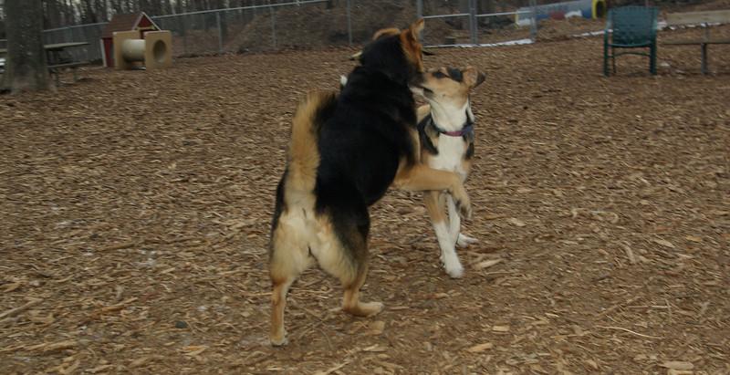 Buddy (puppy), Maddie_01