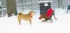 Holly (shiba inu), Cleo (pup)_02