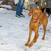 Cleo (pup)_01
