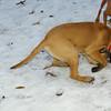 brandy (pup), simba, cleo, lexy_02