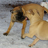 Brandy (pup), Simba_01
