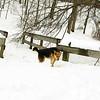 gedney snow_06