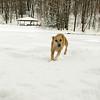 Dixie gedney snow_02