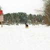 gedney snow_08
