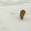 Dixie gedney snow_01
