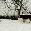 gedney snow_09
