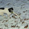 Bela (bc girl pup)_001