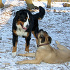 Fritz, Cadance, Snowflake_001