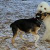 Buddy (new puppy), Otis (pup)_001
